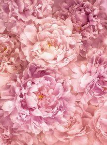 Painel Fotográfico Rosas Soave XXL2-009