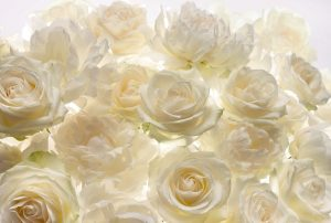 Painel Fotográfico Rosas Brancas XXL4-007