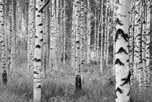 Painel Fotográfico Woods XXL4-023