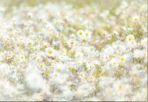 Painel Fotográfico Paisagem de Verão 8-994 3.68m Largura x 2.54m Altura