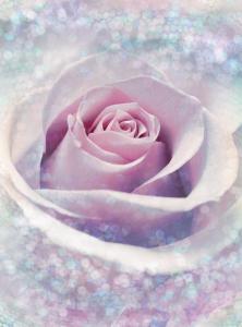 Painel Fotográfico de Rosa com brilho | Ref: XXL2-020