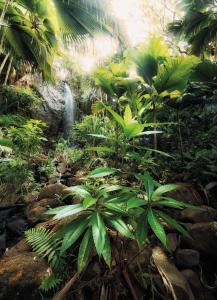Painel Fotográfico Mata Verde | Ref: XXL2-527
