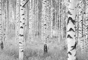 Painel Fotográfico Floresta Preto e Branco | Ref: XXL4-023