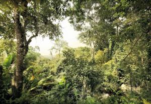 Painel Fotográfico Floresta Tropical | Ref: XXL4-024