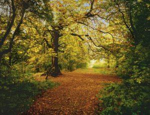 Painel Fotográfico floresta de Outono 8-068